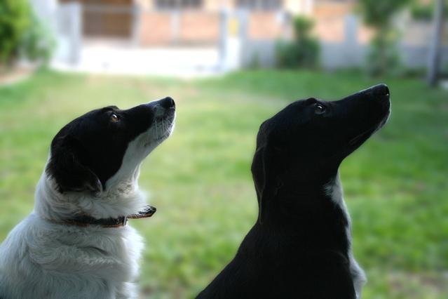 psi co se soustředí…